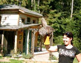 MARS releases a rehabilitated Barred Owl outside the Blue Owl Cottage on Denman Island, BC